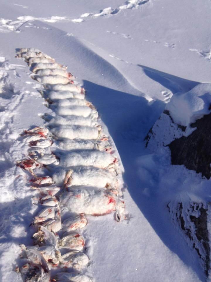 Grønland Jagt