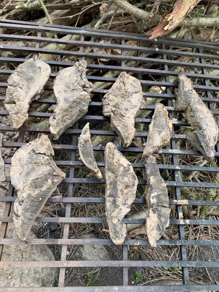 Tørring af tøndersvamp